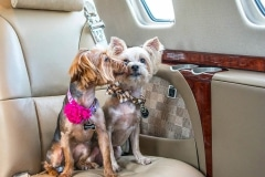 citation-cj3-interior-two-dogs